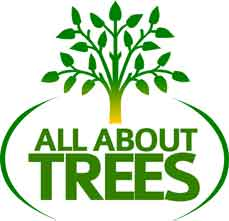 All About Trees AZ a Phoenix Tree Company