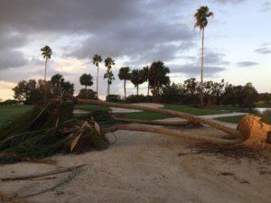 emergency-tree-damage-phoenix