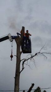 tree-removal-tempe-az