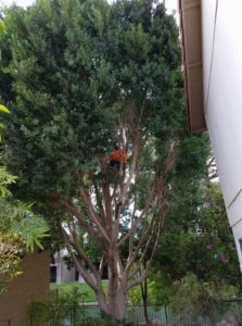 tree-thinning-mesa-az