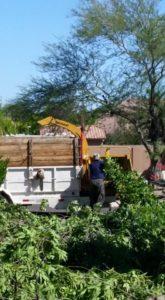 tree-triming-services-phoenix