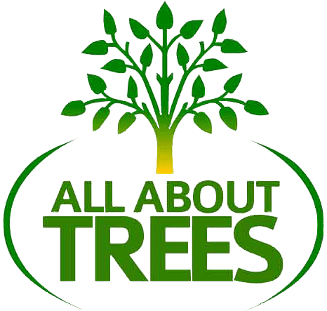 all-about-trees-tempe